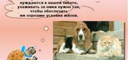 Порядок содержания домашних собак, кошек, а также отлова безнадзорных животных в Беларуси