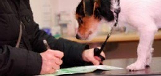 Правила отлова, отстрела и содержания безнадзорных животных в РБ